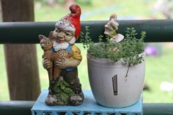 My thyme and antique garden gnome